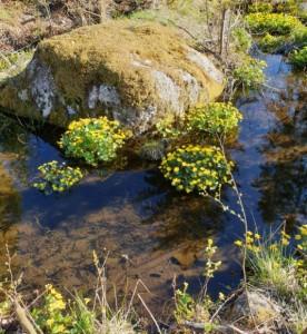 Taavetti-lähdevesi-